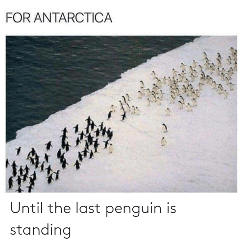 Penguin: FOR ANTARCTICA Until the last penguin is standing