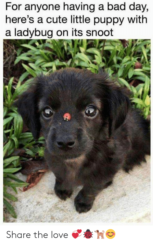 Bad, Bad Day, and Cute: For anyone having a bad day,  here's a cute little puppy with  a ladybug on its snoot Share the love 💞🐞🐕😊