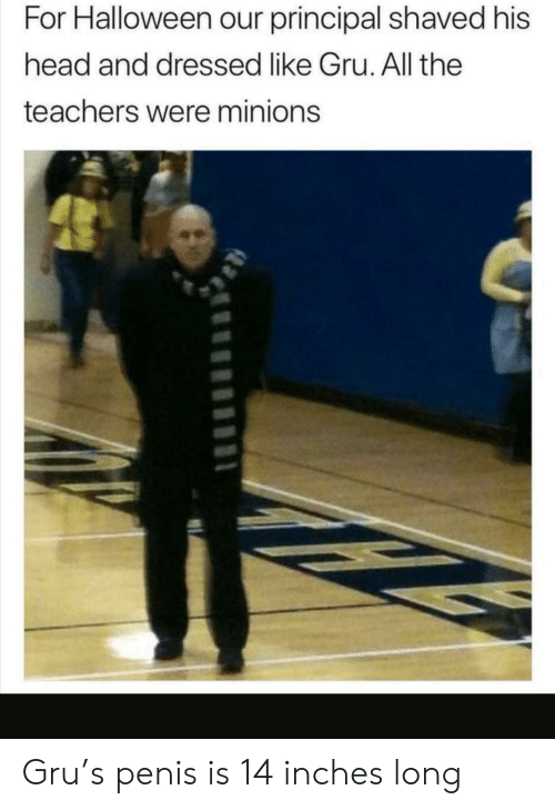His Head: For Halloween our principal shaved his  head and dressed like Gru. All the  teachers were minions Gru's penis is 14 inches long