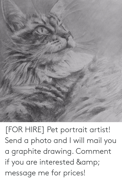 hire: [FOR HIRE] Pet portrait artist! Send a photo and I will mail you a graphite drawing. Comment if you are interested & message me for prices!