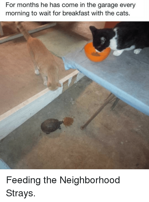 Cats, Breakfast, and Garage: For months he has come in the garage every  morning to wait for breakfast with the cats. <p>Feeding the Neighborhood Strays.</p>