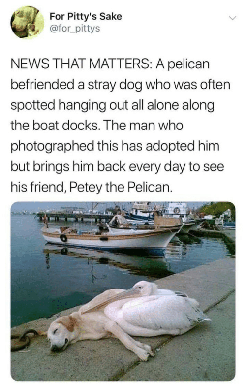 Being Alone, News, and Back: For Pitty's Sake  @for_pittys  NEWS THAT MATTERS: A pelican  befriended a stray dog who was often  spotted hanging out all alone along  the boat docks. The man who  photographed this has adopted him  but brings him back every day to see  his friend, Petey the Pelican.