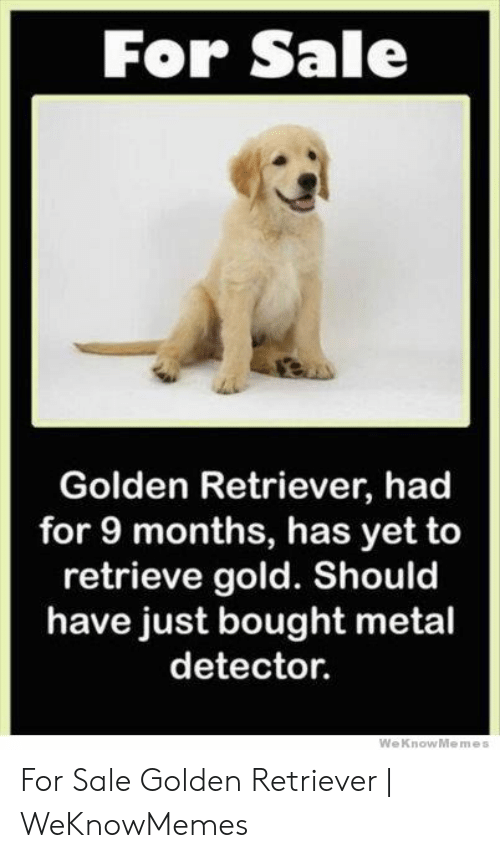 Golden Retriever, Metal, and Gold: For Sale  Golden Retriever, had  for 9 months, has yet to  retrieve gold. Should  have just bought metal  detector.  WeKnowMemes For Sale Golden Retriever   WeKnowMemes