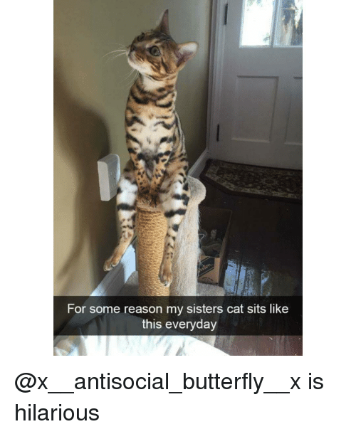 Antisociable: For some reason my sisters cat sits like  this everyday @x__antisocial_butterfly__x is hilarious