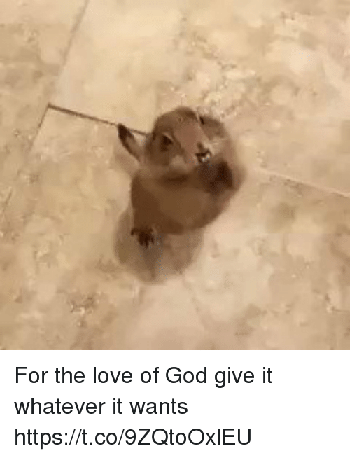 God, Love, and Girl Memes: For the love of God give it whatever it wants   https://t.co/9ZQtoOxlEU