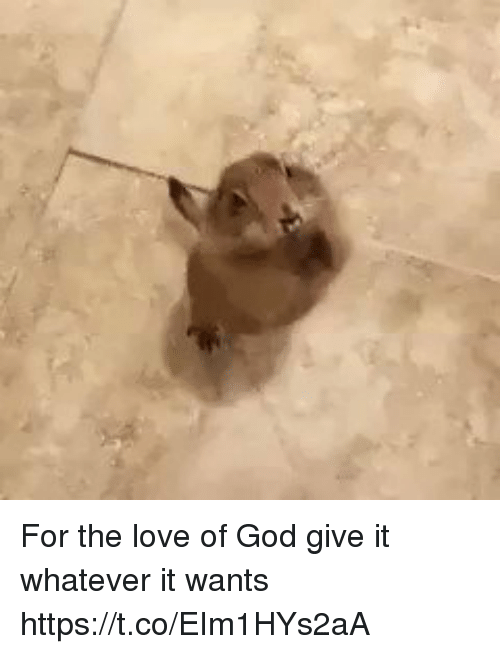 God, Love, and Girl Memes: For the love of God give it whatever it wants   https://t.co/EIm1HYs2aA