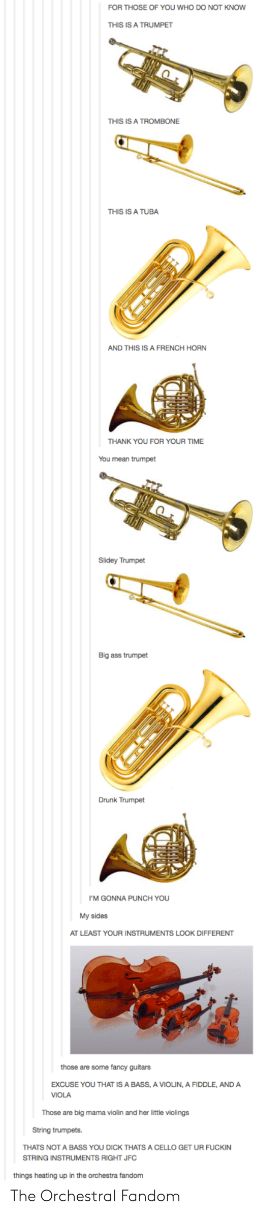 Ass, Drunk, and Thank You: FOR THOSE OF YOU WHO DO NOT KNOW  THIS IS A TRUMPET  THIS IS A TROMBONE  THIS IS A TUBA  AND THIS IS A FRENCH HORN  THANK YOU FOR YOUR TIME  You mean trumpet  Slidey Trumpet  Big ass trumpet  Drunk Trumpet  I'M GONNA PUNCH YOU  My sides  AT LEAST YOUR INSTRUMENTS LOOK DIFFERENT  those are some fancy guitars  EXCUSE YOU THAT IS A BASS, A VIOLIN, A FIDDLE, ANDA  VIOLA  Those are big mama violin and her little violings  String trumpets.  THATS NOT A BASS YOU DICK THATS A CELLO GET UR FUCKIN  STRING INSTRUMENTS RIGHT JFC  things heating up in the orchestra fandom The Orchestral Fandom
