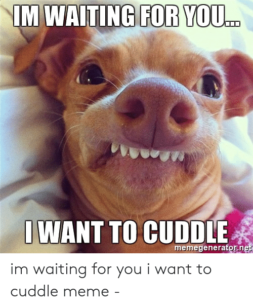 Meme, Waiting..., and You: FOR YOU.  IWANT TO CUDDLE  memegeneratorne im waiting for you i want to cuddle meme -