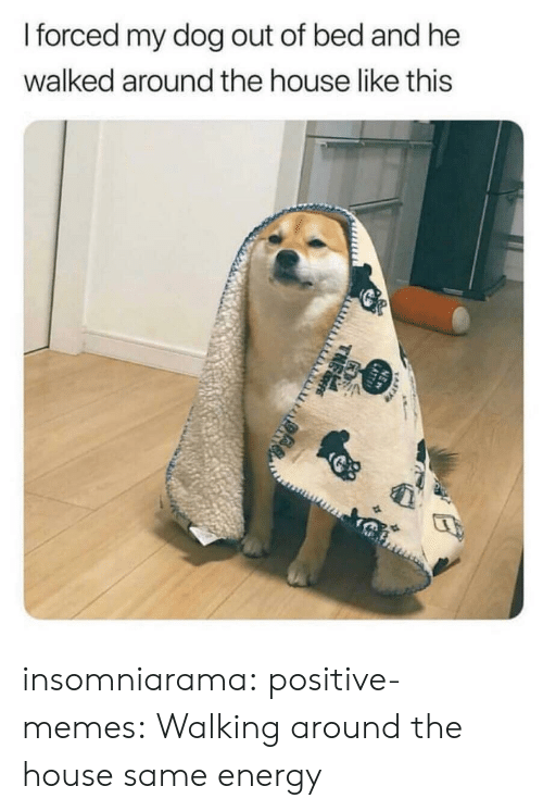 Energy, Memes, and Target: forced my dog out of bed and he  walked around the house like this insomniarama:  positive-memes: Walking around the house same energy