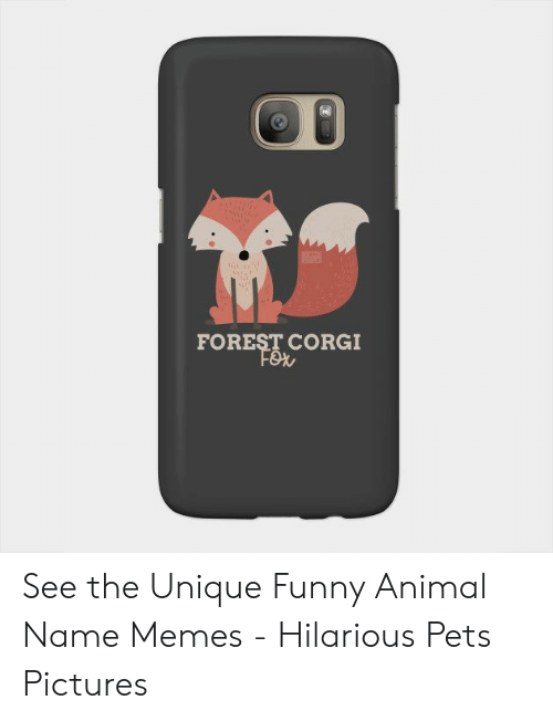 FOREST CORGI See the Unique Funny Animal Name Memes