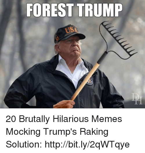 Memes, Http, and Trump: FOREST TRUMP  USA 20 Brutally Hilarious Memes Mocking Trump's Raking Solution: http://bit.ly/2qWTqye