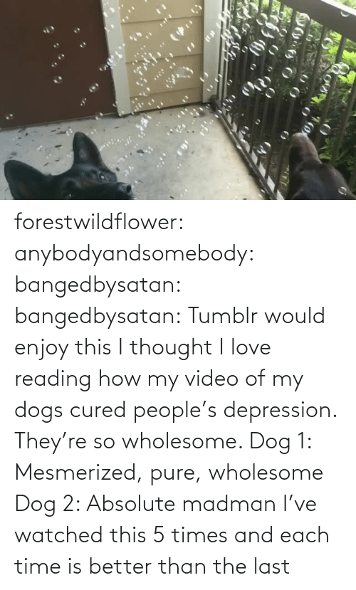 Watched: forestwildflower: anybodyandsomebody:   bangedbysatan:  bangedbysatan:  Tumblr would enjoy this I thought  I love reading how my video of my dogs cured people's depression. They're so wholesome.   Dog 1: Mesmerized, pure, wholesome Dog 2: Absolute madman   I've watched this 5 times and each time is better than the last
