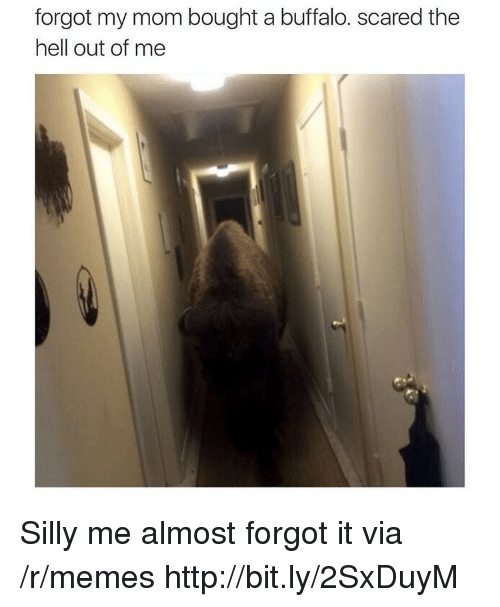Memes, Buffalo, and Http: forgot my mom bought a buffalo. scared the  hell out of me Silly me almost forgot it via /r/memes http://bit.ly/2SxDuyM
