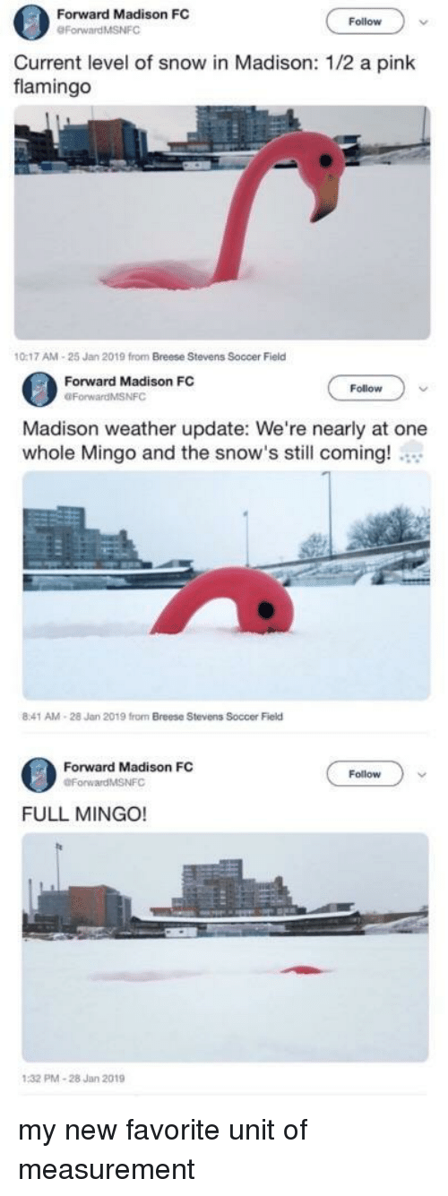 a pink: Forward Madison FC  Follow  Current level of snow in Madison: 1/2 a pink  flamingo  0:17 AM-25 Jan 2019 from Breese Stevens Soccer Field  Forward Madison FC  OForwardMSNFC  Follow  Madison weather update: We're nearly at one  whole Mingo and the snow's still coming!  8:41 AM-28 Jan 2019 from Breese Stevens Soccer Field  Forward Madison FC  Follow  FULL MINGO!  PMA-28 Jan 2019 my new favorite unit of measurement