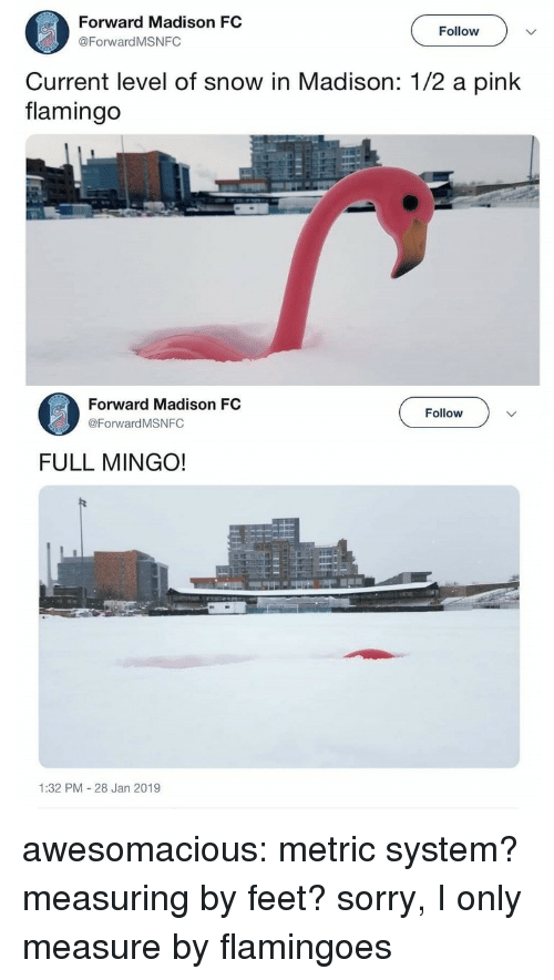 a pink: Forward Madison FC  @ForwardMSNFC  Follow  Current level of snow in Madison: 1/2 a pink  flamingo  Forward Madison FC  @Forward MSNFC  Follow  FULL MINGO!  1:32 PM 28 Jan 2019 awesomacious:  metric system? measuring by feet? sorry, I only measure by flamingoes