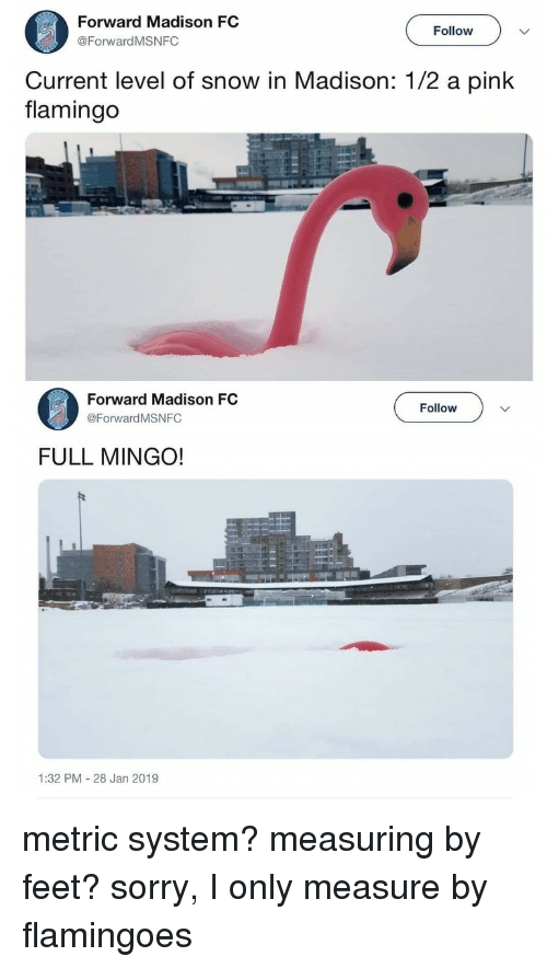 a pink: Forward Madison FC  @ForwardMSNFC  Follow  Current level of snow in Madison: 1/2 a pink  flamingo  Forward Madison FC  @Forward MSNFC  Follow  FULL MINGO!  1:32 PM 28 Jan 2019 metric system? measuring by feet? sorry, I only measure by flamingoes