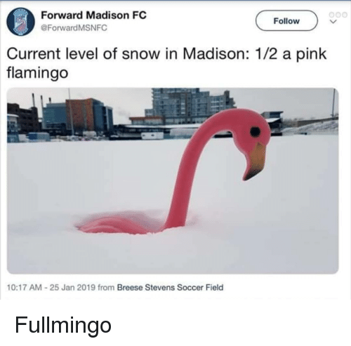 a pink: Forward Madison FC  @ForwardMSNFC  o00  Follow  Current level of snow in Madison: 1/2 a pink  flamingo  10:17 AM-25 Jan 2019 from Breese Stevens Soccer Field Fullmingo