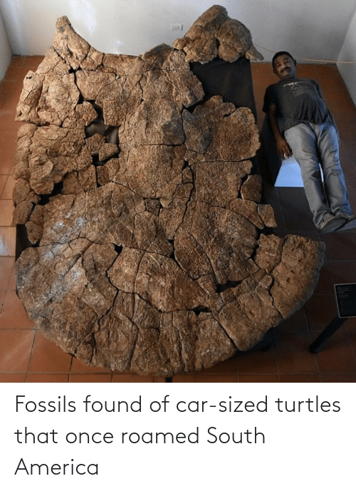 turtles: Fossils found of car-sized turtles that once roamed South America