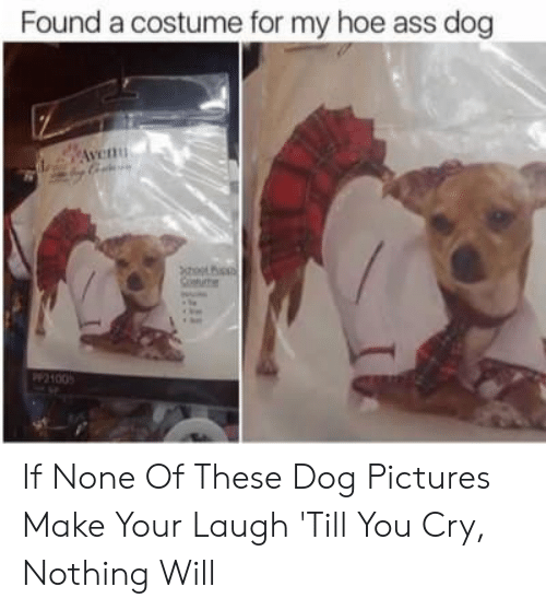 Laugh Till: Found a costume for my hoe ass dog If None Of These Dog Pictures Make Your Laugh 'Till You Cry, Nothing Will
