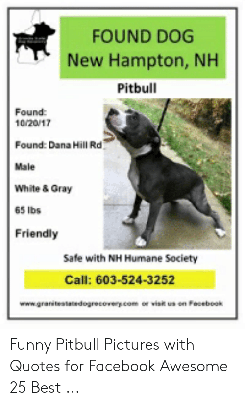 Funny Pitbull Pictures: FOUND DOG  New Hampton, NH  Pitbull  Found  10/20/17  Found: Dana Hill Rd  Male  White & Gray  65 lbs  Friendly  Safe with NH Humane Society  Call: 603-524-3252  www.granitestatedogrecovery.com or visit us on Facebook Funny Pitbull Pictures with Quotes for Facebook Awesome 25 Best ...
