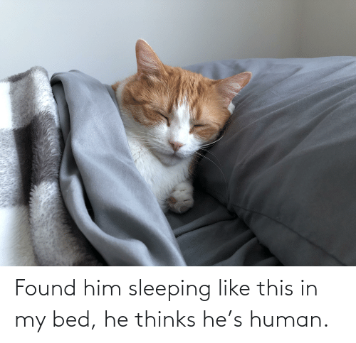 Found Him: Found him sleeping like this in my bed, he thinks he's human.