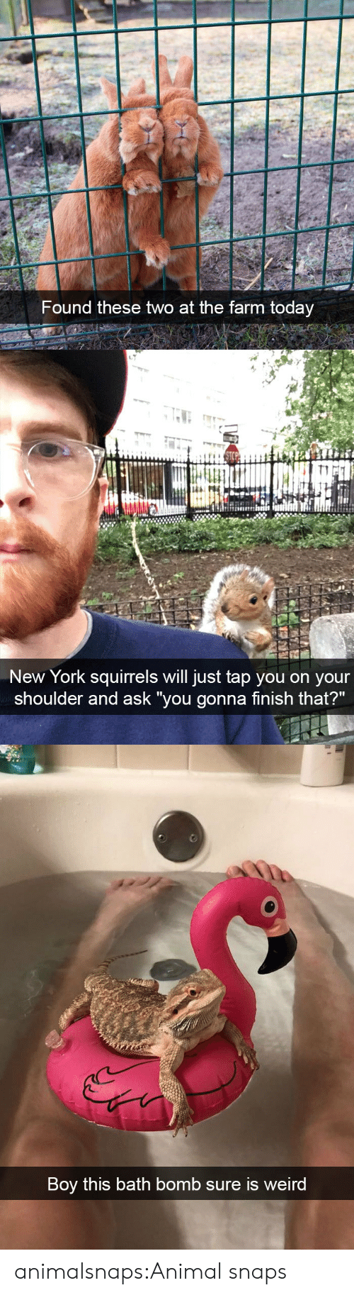 """New York, Target, and Tumblr: Found these two at the farm today   New York squirrels will just tap you on your  shoulder and ask """"you gonna finish that?""""   Boy this bath bomb sure is weird animalsnaps:Animal snaps"""
