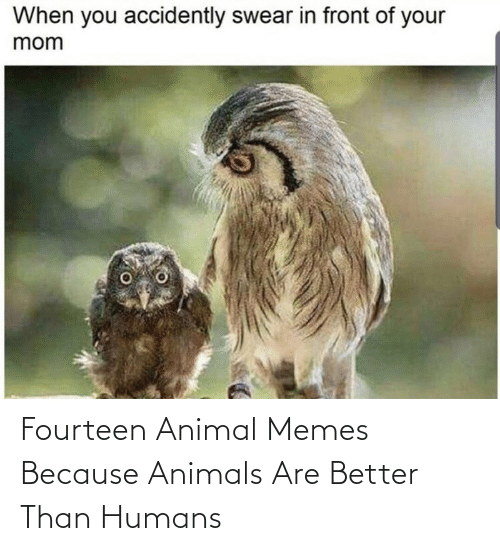 because: Fourteen Animal Memes Because Animals Are Better Than Humans