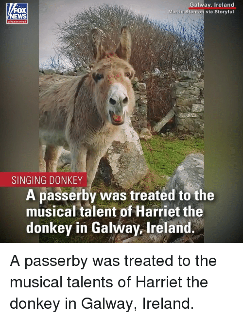Donkey, Martin, and Memes: FOX  EWS  Galway, Ireland  Martin Stanton via Storyful  channel  SINGING DONKEY  A passerby was treated to the  musical talent of Harriet the  donkey in Galway, Ireland A passerby was treated to the musical talents of Harriet the donkey in Galway, Ireland.