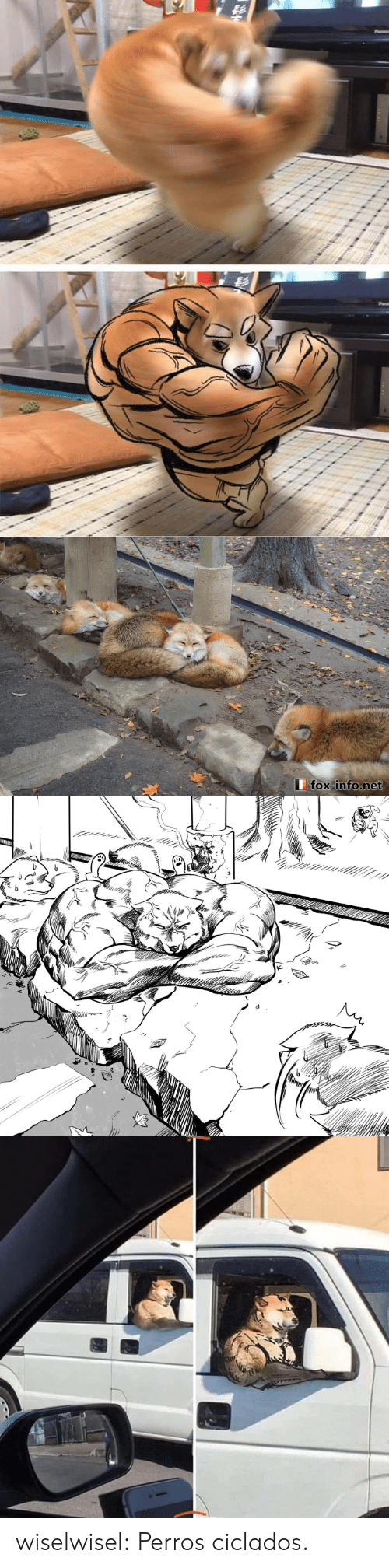 Gif, Tumblr, and Blog: fox info.net wiselwisel:    Perros ciclados.