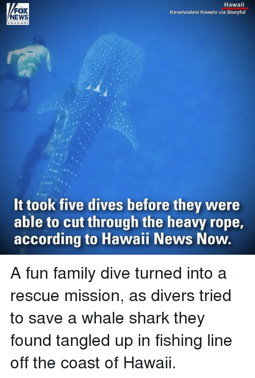 Family, Memes, and News: FOX  NEWS  Hawaii  Kanehoalani Kawelo via Storyful  It took five dives before they were  able to cut through the heavy rope,  according to Hawaii News Now A fun family dive turned into a rescue mission, as divers tried to save a whale shark they found tangled up in fishing line off the coast of Hawaii.
