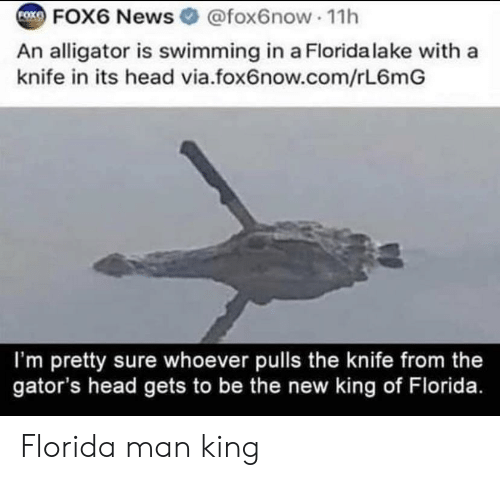 Swimming: FOX6 News @fox6now 1h  FOXE  An alligator is swimming in a Florida lake with a  knife in its head via.fox6now.com/rL6mG  I'm pretty sure whoever pulls the knife from the  gator's head gets to be the new king of Florida. Florida man king