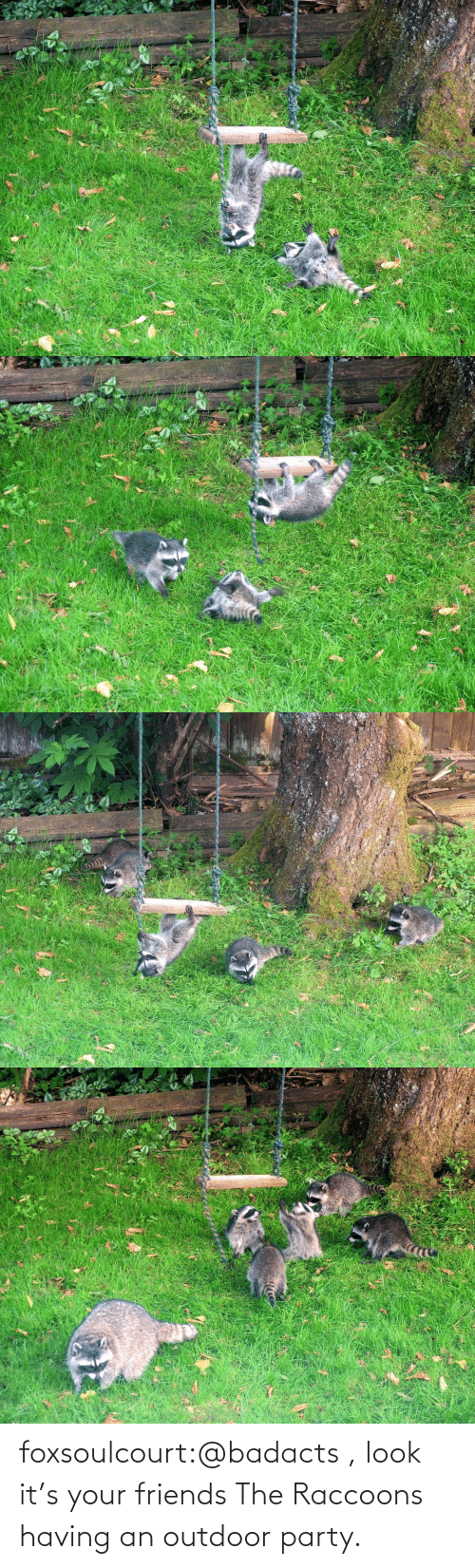 Outdoor: foxsoulcourt:@badacts , look it's your friends The Raccoons having an outdoor party.