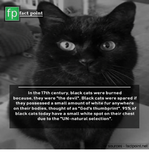 "Bodies , Cats, and Memes: fp  fact point  In the 17th century, black cats were burned  because, they were ""the devil"" Black cats were spared if  they possessed a small amount of white fur anywhere  on their bodies, thought of as ""God's thumbprint"". 95% of  black cats today have a small white spot on their chest  due to the ""UN-natural selection"".  sources factpoint.net"