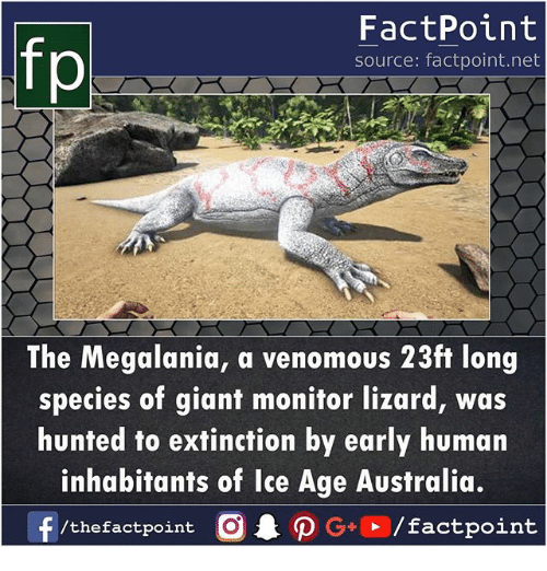 Memes, Ice Age, and Australia: fp  FactPoint  source: factpoint.net  The Megalania, a venomous 23ft long  species of giant monitor lizard, was  hunted to extinction by early human  inhabitants of Ice Age Australia.  /thefactpoint O