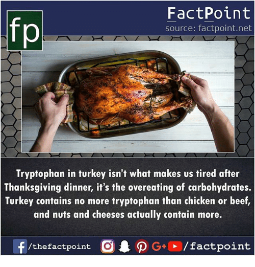 overeating: fp  FactPoint  source: factpoint.net  Tryptophan in turkey isn't what makes us tired after  Thanksgiving dinner, it's the overeating of carbohydrates.  Turkey contains no more tryptophan than chicken or beef  and nuts and cheeses actually contain more.