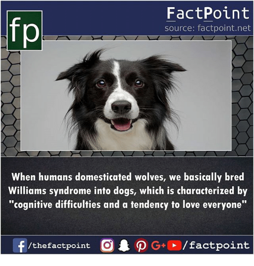 """cognitive: fp  FactPoint  source: factpoint.net  When humans domesticated wolves, we basically bred  Williams syndrome into dogs, which is characterized by  """"cognitive difficulties and a tendency to love everyone"""""""