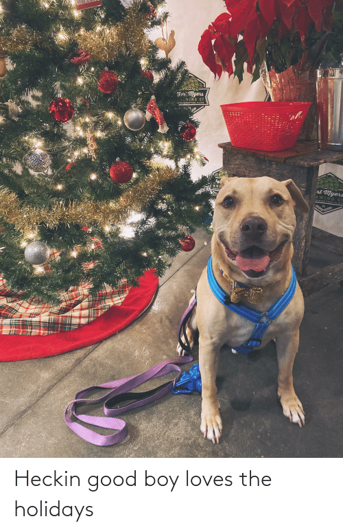 Heckin Good: Fr: Myers  ING CO  AN CRAFTED ALES  ri Myers  EWING CE  BRE  HAND  ICRAFTED AL ES  FL Heckin good boy loves the holidays