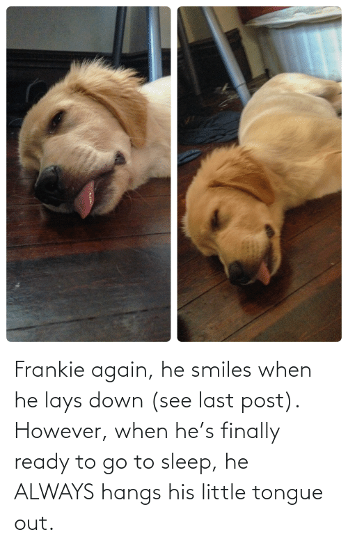 He Smiles: Frankie again, he smiles when he lays down (see last post). However, when he's finally ready to go to sleep, he ALWAYS hangs his little tongue out.