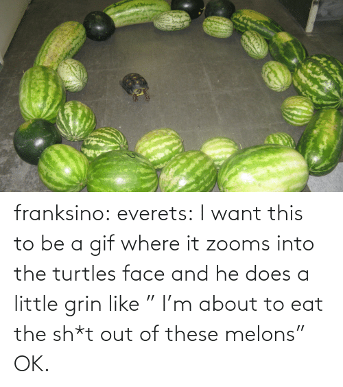"A Gif: franksino: everets:  I want this to be a gif where it zooms into the turtles face and he does a little grin like "" I'm about to eat the sh*t out of these melons""  OK."