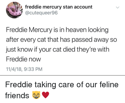 Friends, Heaven, and Stan: freddie mercury stan account  @cutequeer96  Freddie Mercury is in heaven looking  after every cat that has passed away so  just know if your cat died they're with  Freddie now  11/4/18, 9:33 PM Freddie taking care of our feline friends 😸♥️