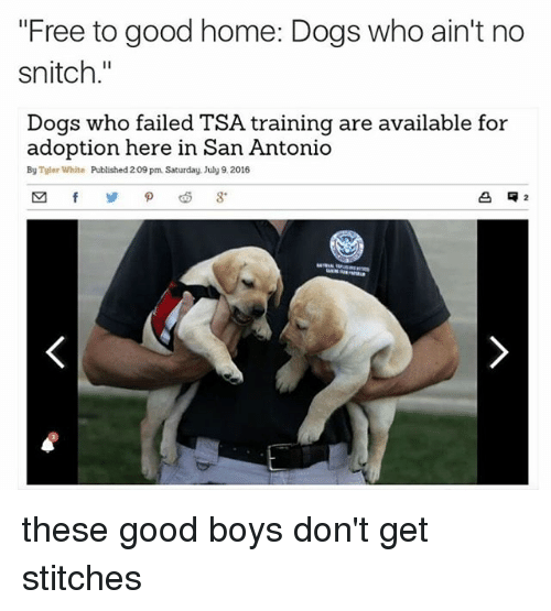 "Memes, Snitch, and Stitches: ""Free to good home: Dogs who ain't no  snitch.""  Dogs who failed TSA training are available for  adoption here in San Antonio  By Tyler White  Published 209 pm Saturday. July 9.2016 these good boys don't get stitches"