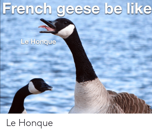 geese: French geese be like  Le Honque Le Honque