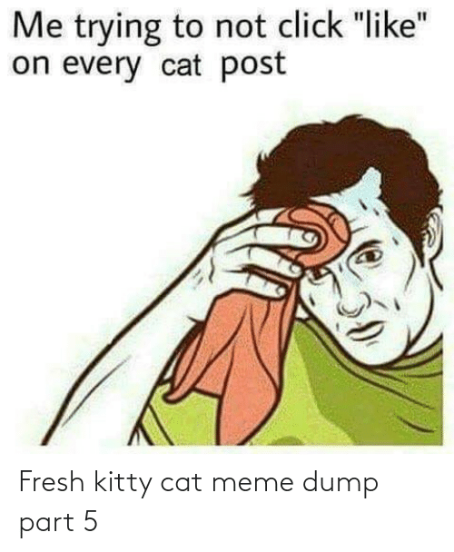 cat meme: Fresh kitty cat meme dump part 5