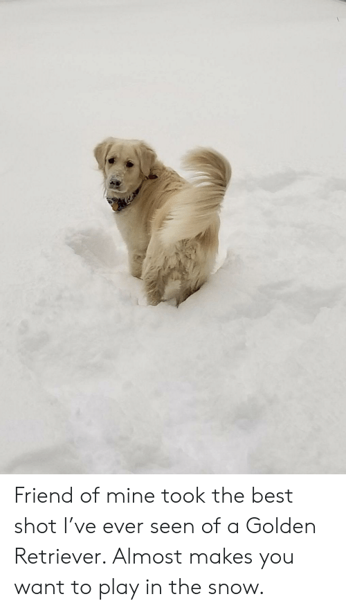 Best, Golden Retriever, and Snow: Friend of mine took the best shot I've ever seen of a Golden Retriever. Almost makes you want to play in the snow.