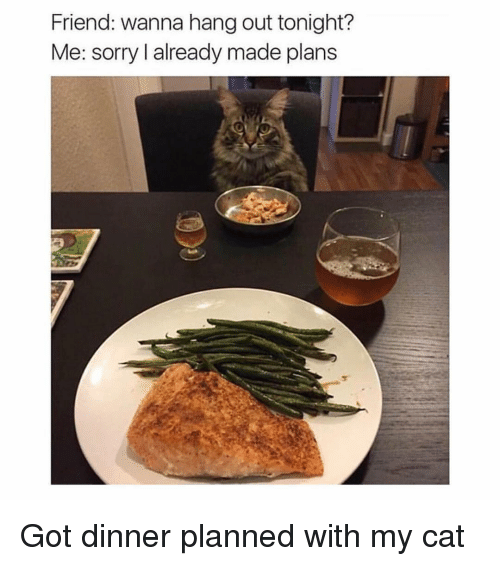 Memes, Sorry, and 🤖: Friend: wanna hang out tonight?  Me: sorry l already made plans Got dinner planned with my cat