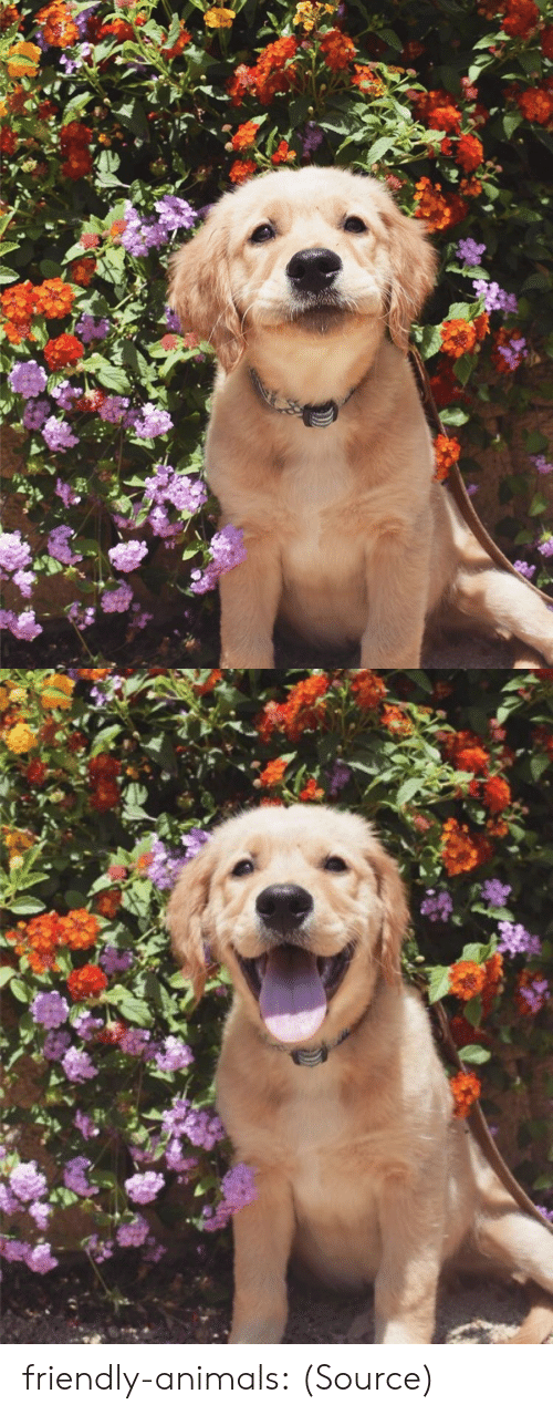 Animals, Instagram, and Tumblr: friendly-animals: (Source)