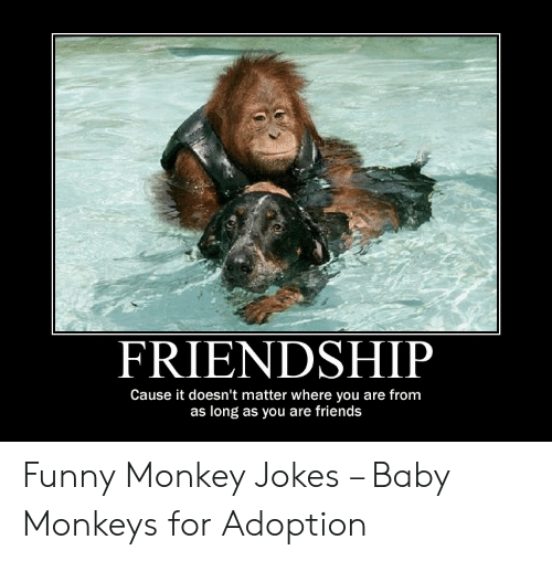 Friendship Cause It Doesn T Matter Where You Are From As Long As You Are Friends Funny Monkey Jokes Baby Monkeys For Adoption Friends Meme On Awwmemes Com
