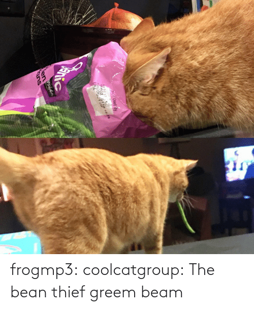 beam: frogmp3: coolcatgroup: The bean thief   greem beam