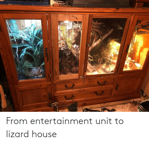 lizard: From entertainment unit to lizard house