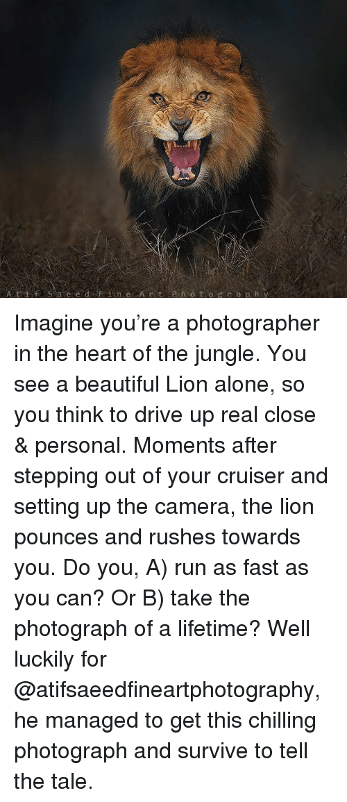 Being Alone, Beautiful, and Memes: fS a e e d Fine Art P h o t og r aph y Imagine you're a photographer in the heart of the jungle. You see a beautiful Lion alone, so you think to drive up real close & personal. Moments after stepping out of your cruiser and setting up the camera, the lion pounces and rushes towards you. Do you, A) run as fast as you can? Or B) take the photograph of a lifetime? Well luckily for @atifsaeedfineartphotography, he managed to get this chilling photograph and survive to tell the tale.